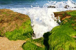 Alga marina sulle coste del mare