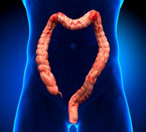 Corpo umano con evidenza l'intestino crasso