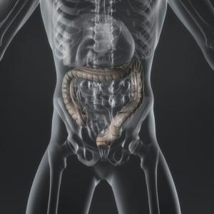 Immagine del corpo umano con in evidenza l'intestino