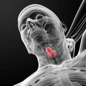 Tiroide nella parte anteriore del collo